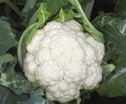 wczesne odmiany kalafiora
