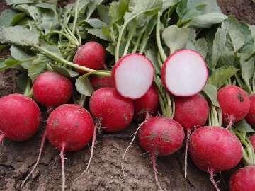 oprysk na chwasty w truskawkach na wiosnę