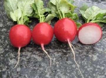 owoce roślin nasiennych