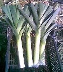por roślina