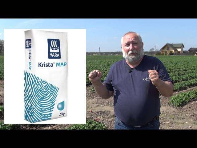 Nawożenie truskawek z firmą Yara