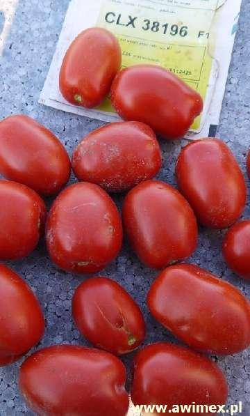 naturalne środki ochrony pomidorów