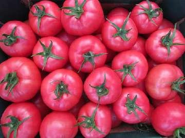nawóz do pomidorów