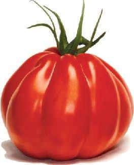 obrywanie liści pomidorów