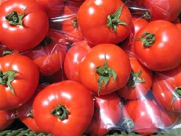 ochrona pomidora