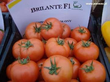 ochrona pomidorów
