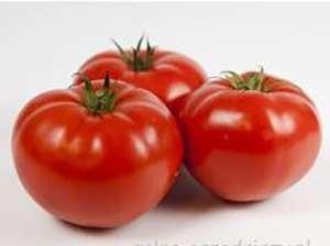 odmiany pomidorów foliowych