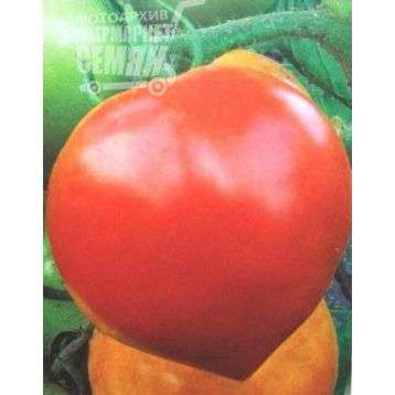 oprysk pomidorów miedzianem