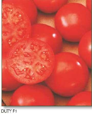 pikowanie pomidorow