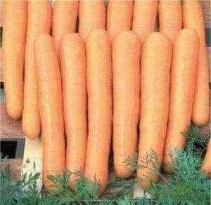 przechowywanie marchewki