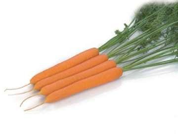 przerywanie marchewki