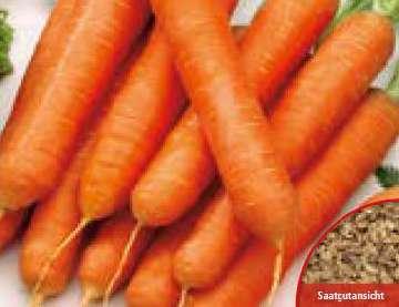 ceny marchewki