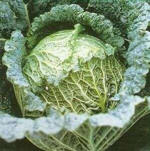 płuczki do warzyw