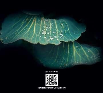 kwieciak malinowiec larwa