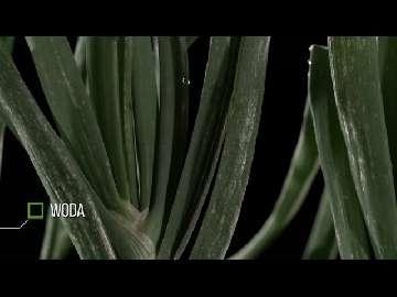 ceny cebuli 2014