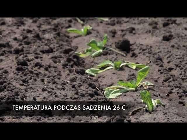ogłoszenia dla rolników