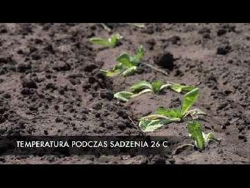 ogłoszenia rolnictwo