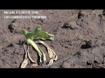 ceny środków ochrony roślin sałaty