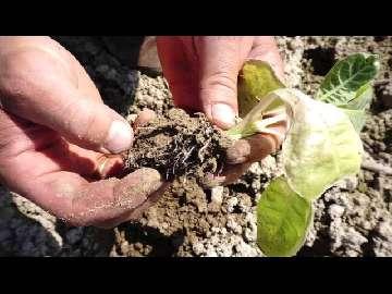 ceny zbóż małopolska 2013
