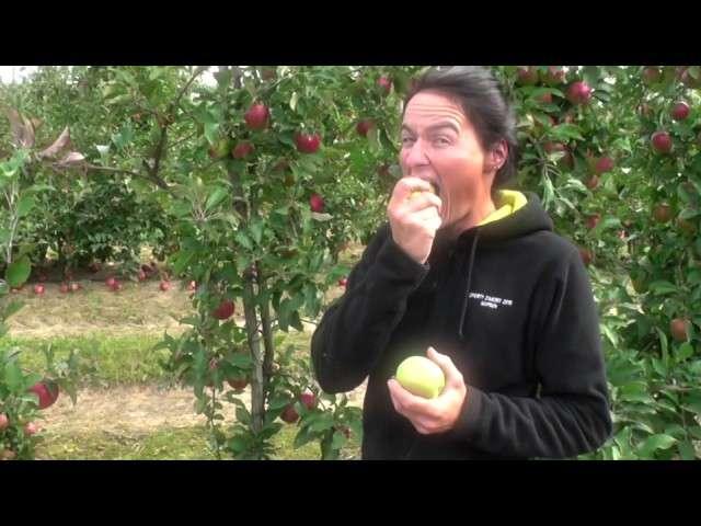 mutsu jabłko