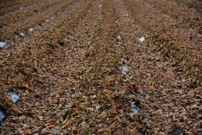 giełda rolna zboża