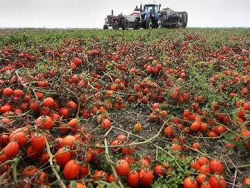 paparzyn maszyny rolnicze