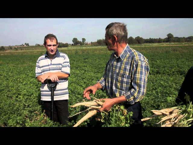 rolpetrol notowania zbóż