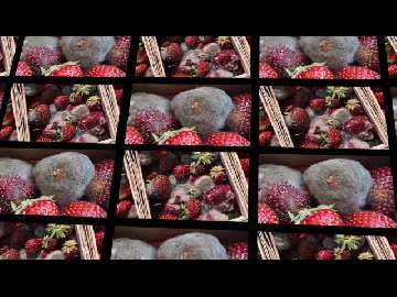 nawozy do truskawek