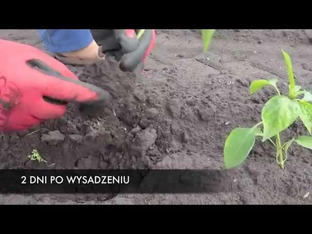 roboty do przesadzania roślin