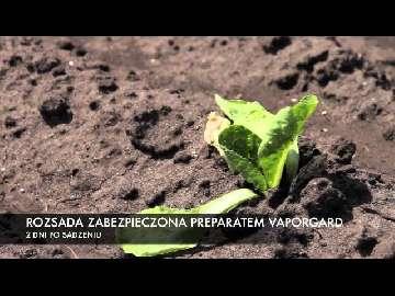 alternarioza pomidora zwalczanie
