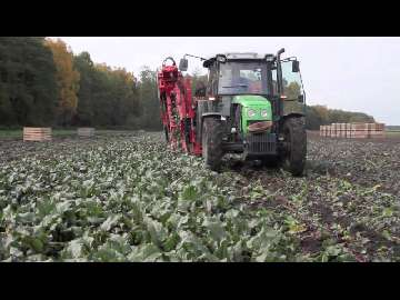 agrotechnika buraka cukrowego
