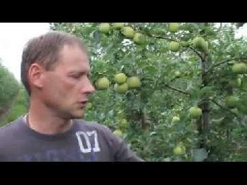 Przedzbiorcza ochrona jabłoni.