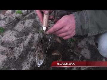jak stymulować korzenie truskawek