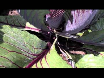 warzywa straty w czasie oprysku