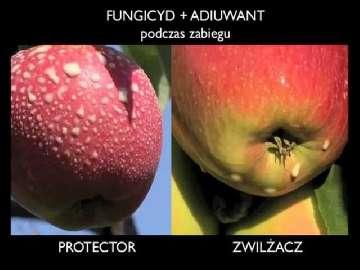 jabłoń choroby i szkodniki