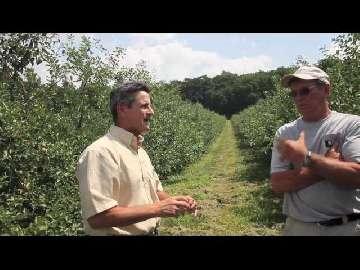 choroby jabłoni gala zdjęcia